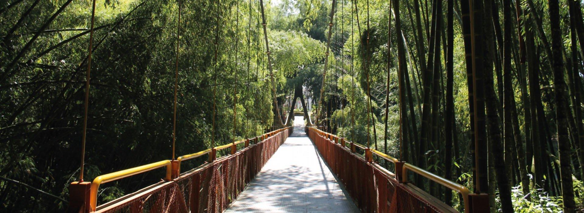 Foto del Puente Colgante en el Parque del Café