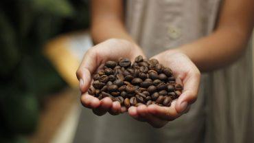 manos sosteniendo granos de Café